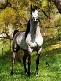 Egy csodaszép ló!